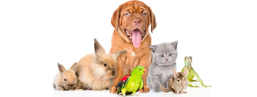 pet aftercare the eco friendly approach peaceful pets aquamation