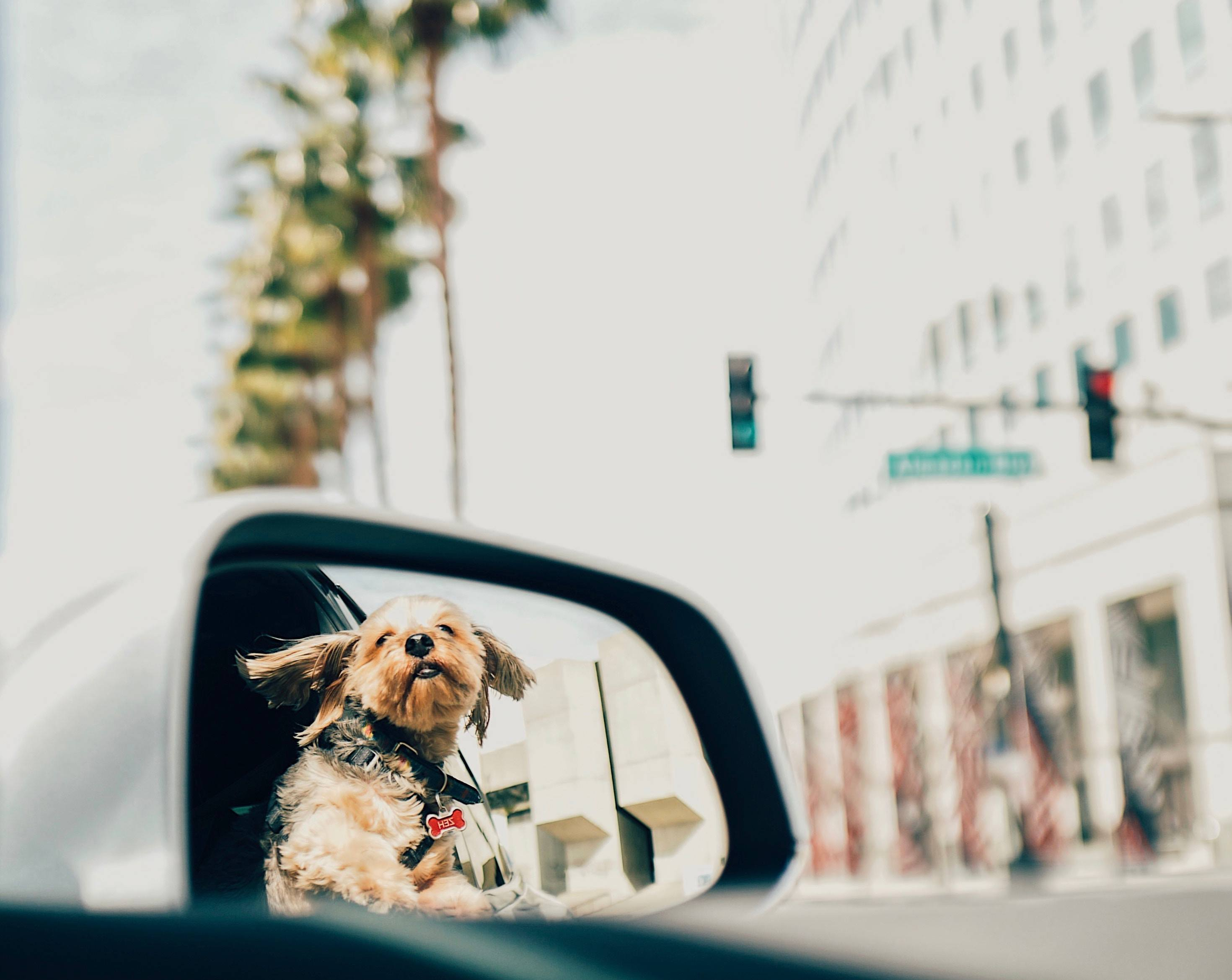 4 Places to Take Your Dog This Summer